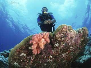 Dive Ocean