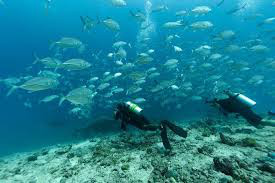 Diving & Marine Life