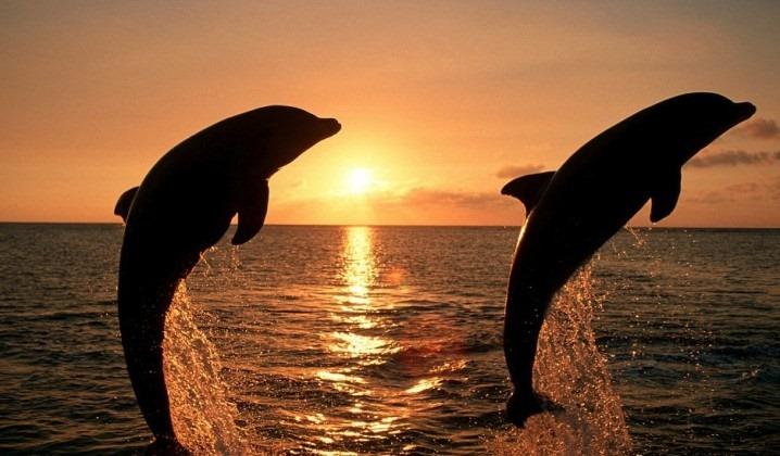 Dolphin / Sunset Cruise