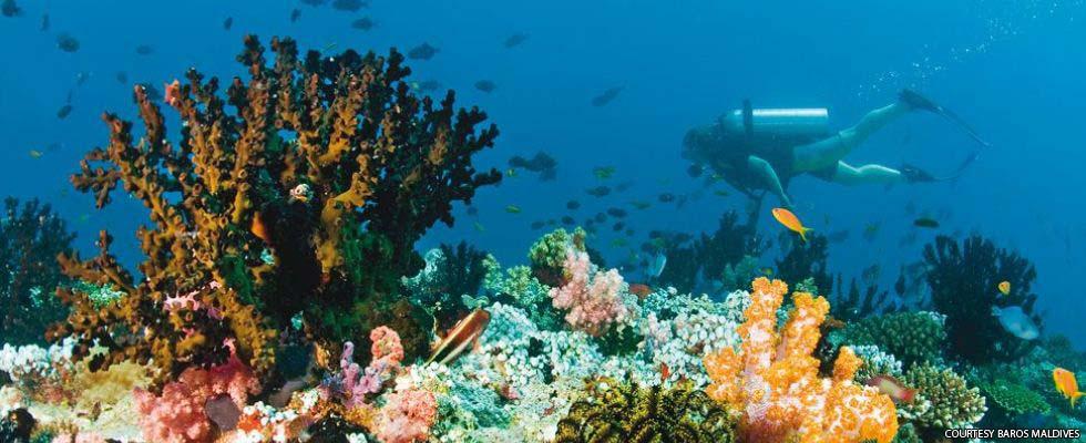 Divers Baros Maldives